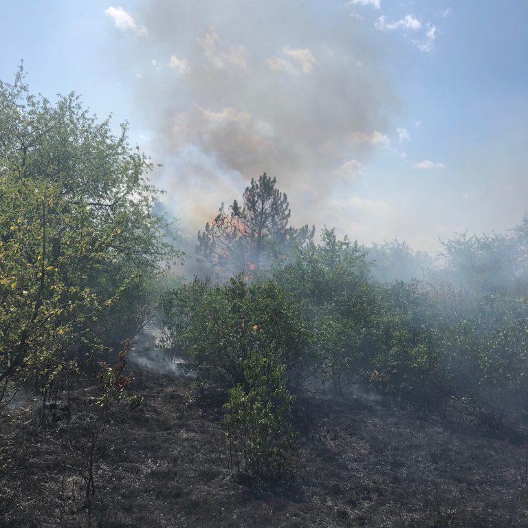 20190726-B2-Waldbrand-Sektor-B-Kuschelgelände-02-1.jpg